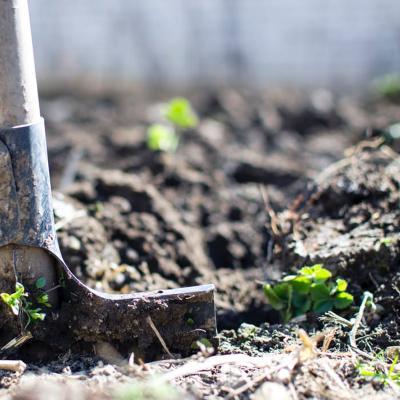 Gartenbauwissenschaft